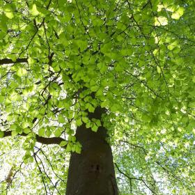 Birgit Monz Coaching und Reikipraxis - Baummeditation