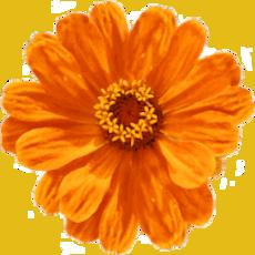 Birgit Monz Coaching und Reikipraxis - orangene Blume