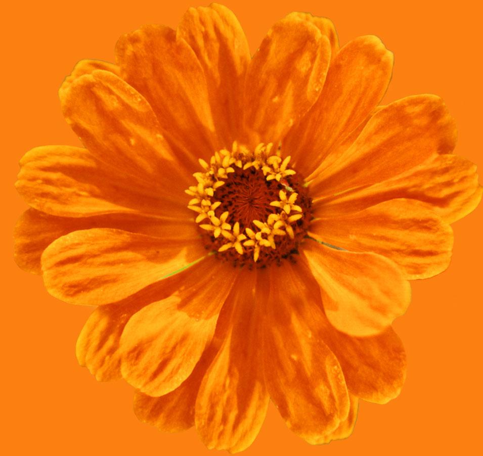 Birgit Monz Coaching und Reikipraxis Blume orange