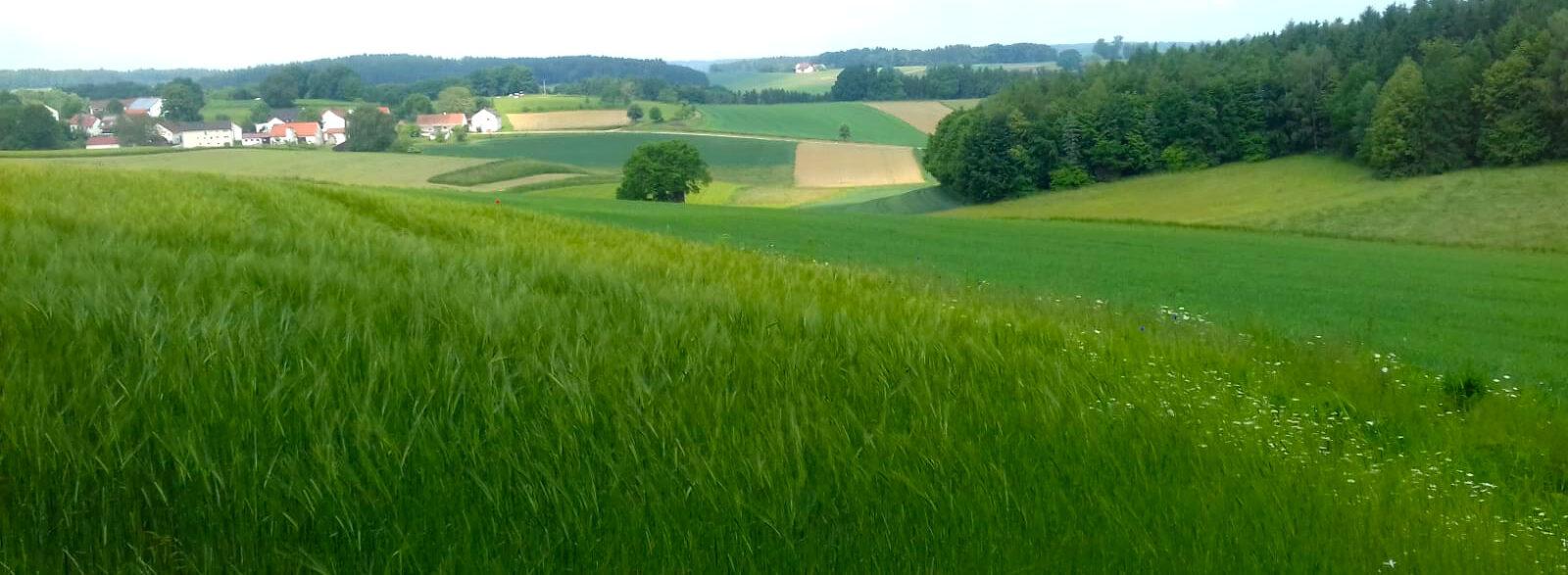 Birgit Monz - Das Leben Spüren - Sommer Wiese