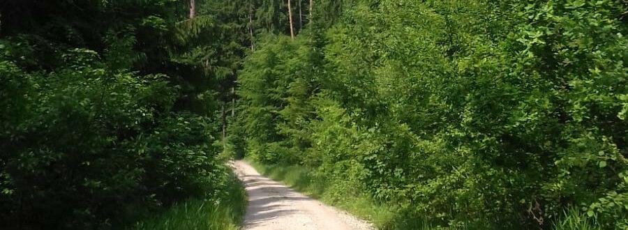 Birgit Monz - Das Leben Spüren - Sommer Weg